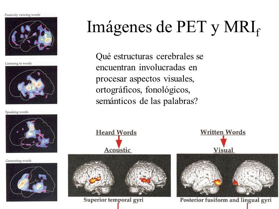 Imágenes de PET y MRI f Qué estructuras cerebrales se encuentran involucradas en procesar aspectos visuales, ortográficos, fonológicos, semánticos de