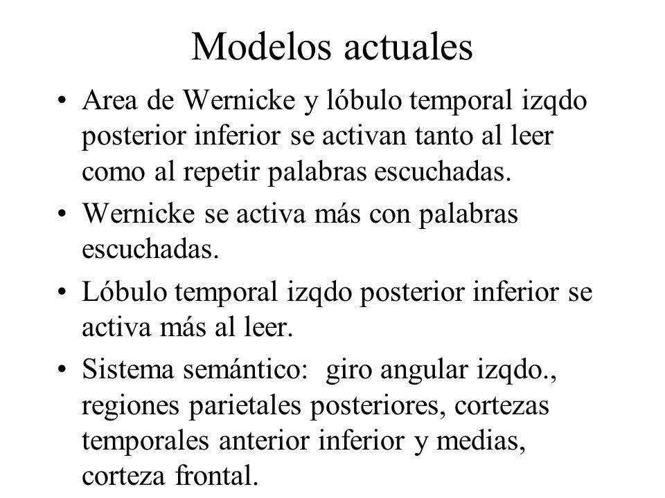 Modelos actuales Area de Wernicke y lóbulo temporal izqdo posterior inferior se activan tanto al leer como al repetir palabras escuchadas. Wernicke se