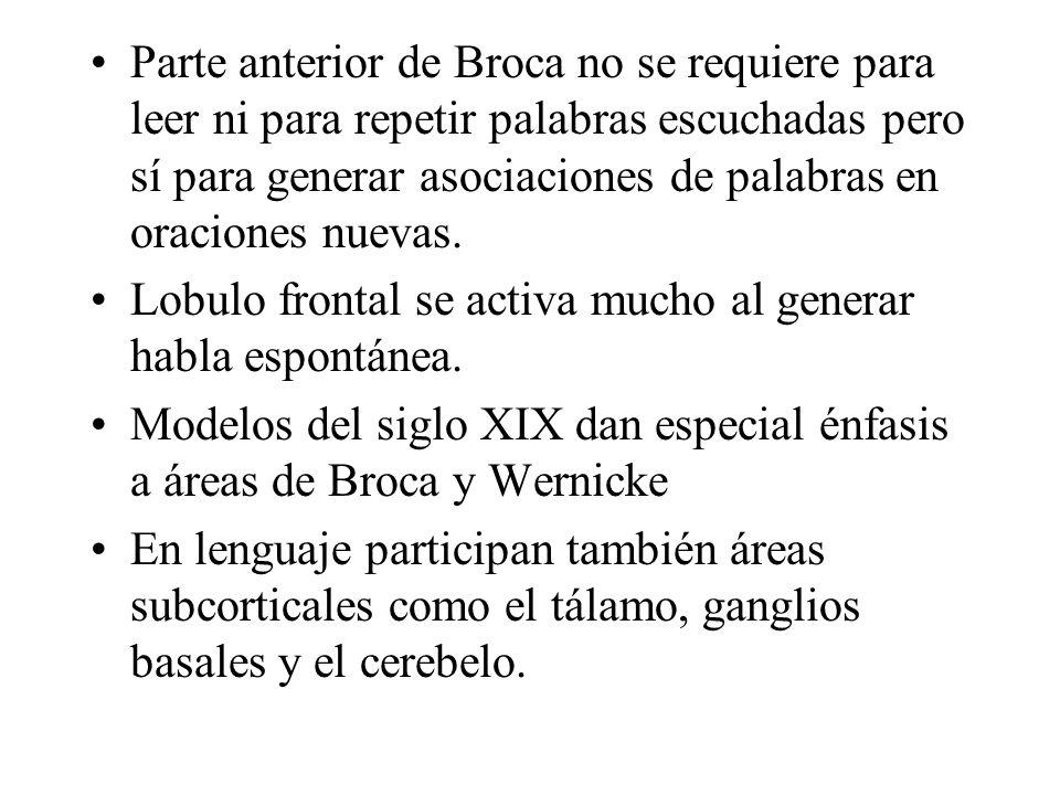 Parte anterior de Broca no se requiere para leer ni para repetir palabras escuchadas pero sí para generar asociaciones de palabras en oraciones nuevas