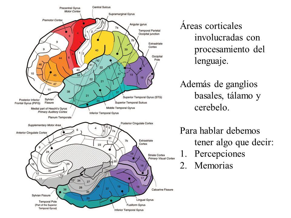 Áreas corticales involucradas con procesamiento del lenguaje. Además de ganglios basales, tálamo y cerebelo. Para hablar debemos tener algo que decir: