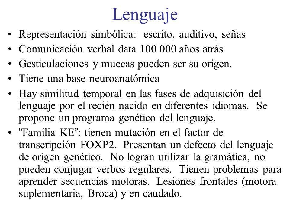 Lenguaje Representación simbólica: escrito, auditivo, señas Comunicación verbal data 100 000 años atrás Gesticulaciones y muecas pueden ser su origen.