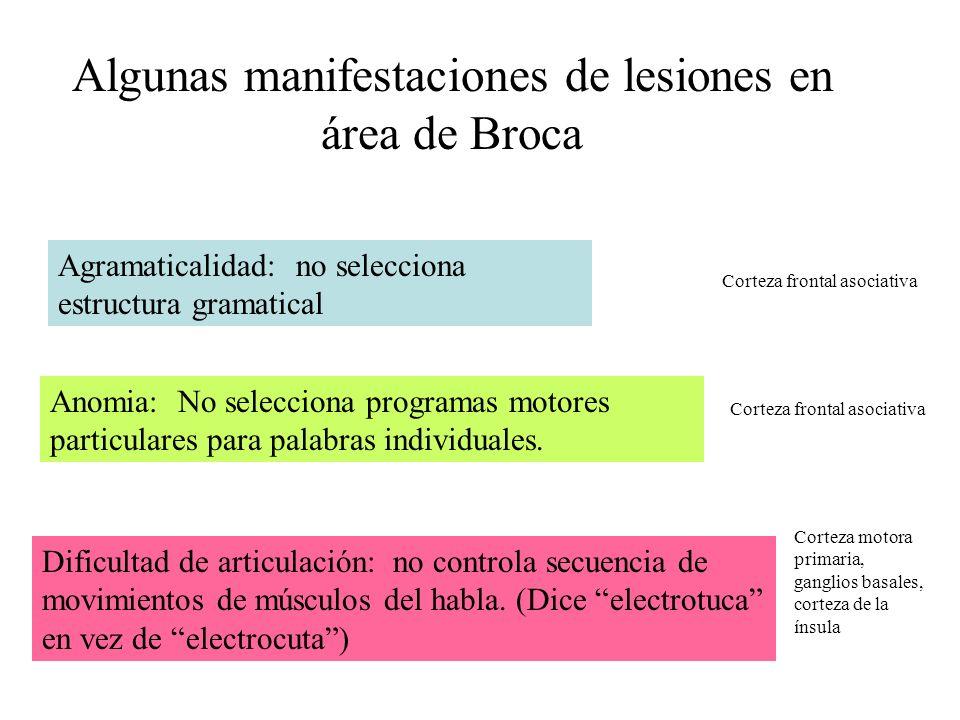 Algunas manifestaciones de lesiones en área de Broca Agramaticalidad: no selecciona estructura gramatical Anomia: No selecciona programas motores part