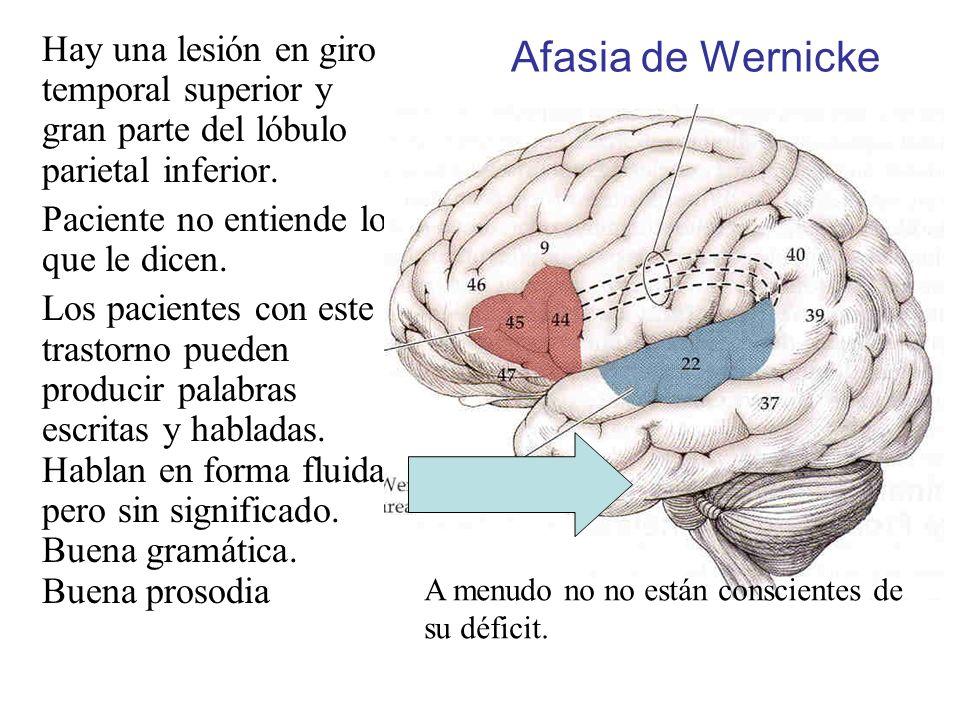 Hay una lesión en giro temporal superior y gran parte del lóbulo parietal inferior. Paciente no entiende lo que le dicen. Los pacientes con este trast
