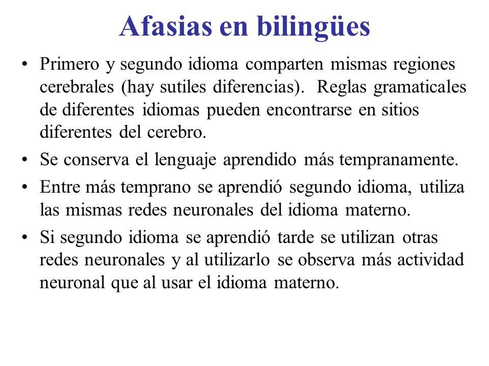 Afasias en bilingües Primero y segundo idioma comparten mismas regiones cerebrales (hay sutiles diferencias). Reglas gramaticales de diferentes idioma