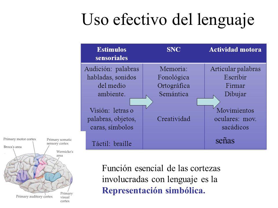 Uso efectivo del lenguaje Función esencial de las cortezas involucradas con lenguaje es la Representación simbólica. señas