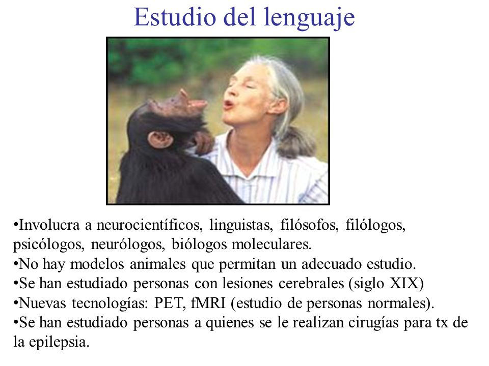 Siglo XIX: Modelos neurológicos del lenguaje Broca: 1861 Área Broca izqda es más grande que derecha.