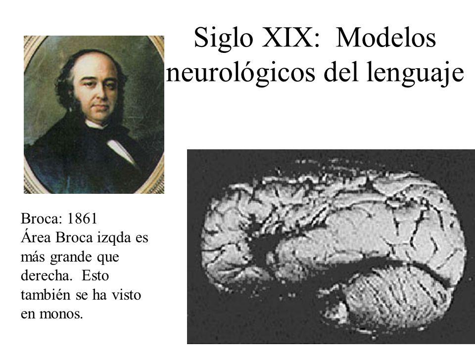 Siglo XIX: Modelos neurológicos del lenguaje Broca: 1861 Área Broca izqda es más grande que derecha. Esto también se ha visto en monos.