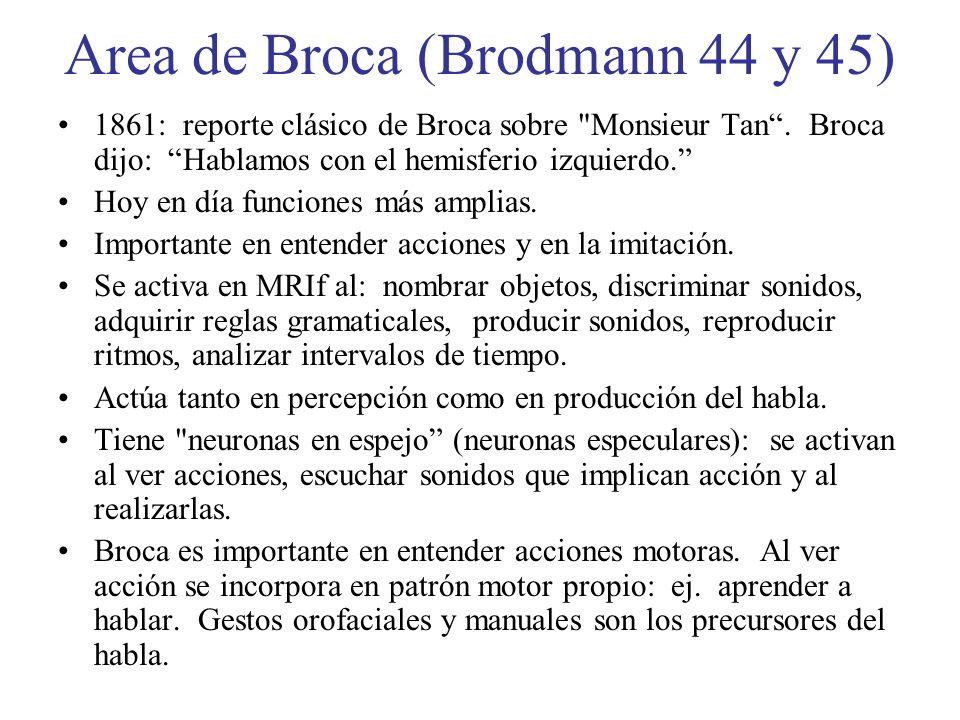 Area de Broca (Brodmann 44 y 45) 1861: reporte clásico de Broca sobre