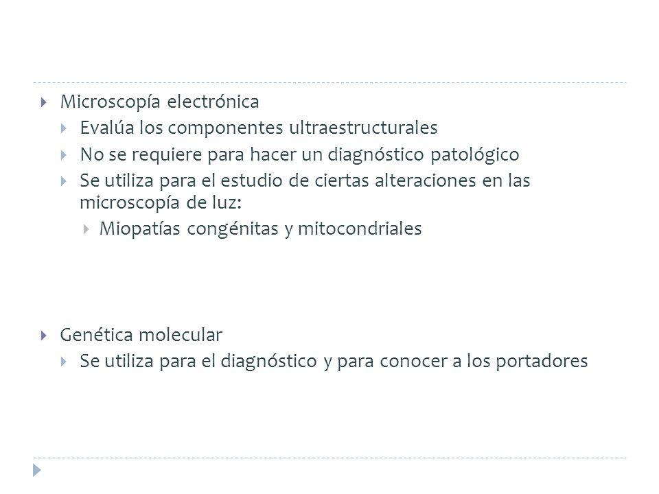 Microscopía electrónica Evalúa los componentes ultraestructurales No se requiere para hacer un diagnóstico patológico Se utiliza para el estudio de ci