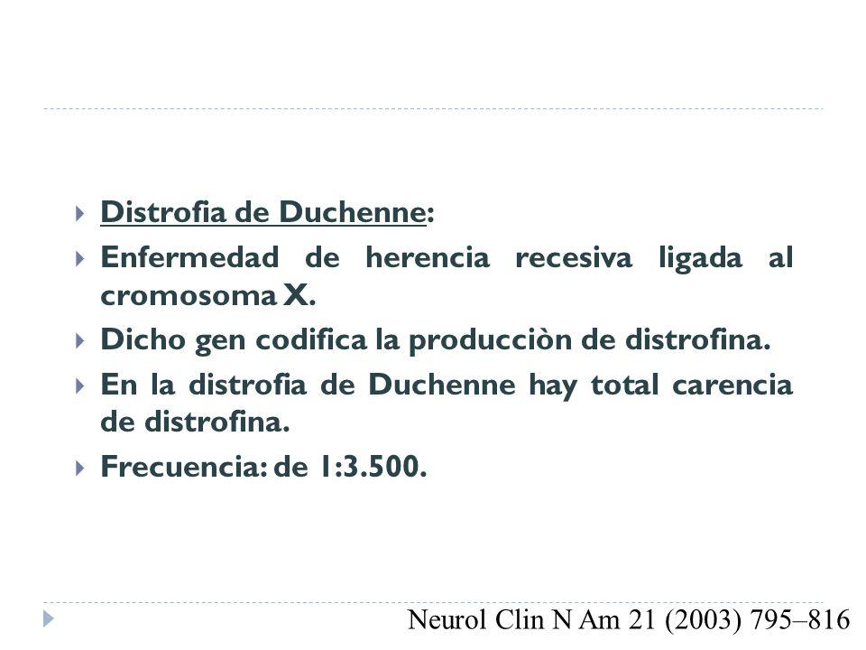 DISTROFIA DE DUCHENNE Y BECKER Distrofia de Duchenne: Enfermedad de herencia recesiva ligada al cromosoma X. Dicho gen codifica la producciòn de distr