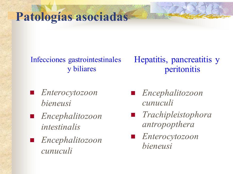 Patologías asociadas Infecciones gastrointestinales y biliares Enterocytozoon bieneusi Encephalitozoon intestinalis Encephalitozoon cunuculi Hepatitis