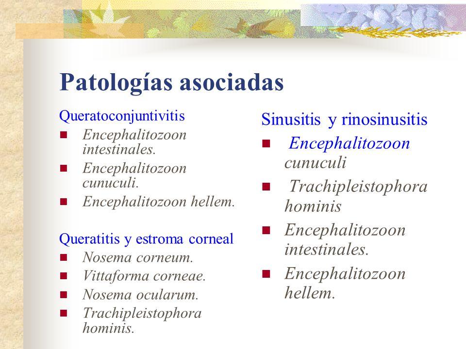 Patologías asociadas Queratoconjuntivitis Encephalitozoon intestinales. Encephalitozoon cunuculi. Encephalitozoon hellem. Queratitis y estroma corneal