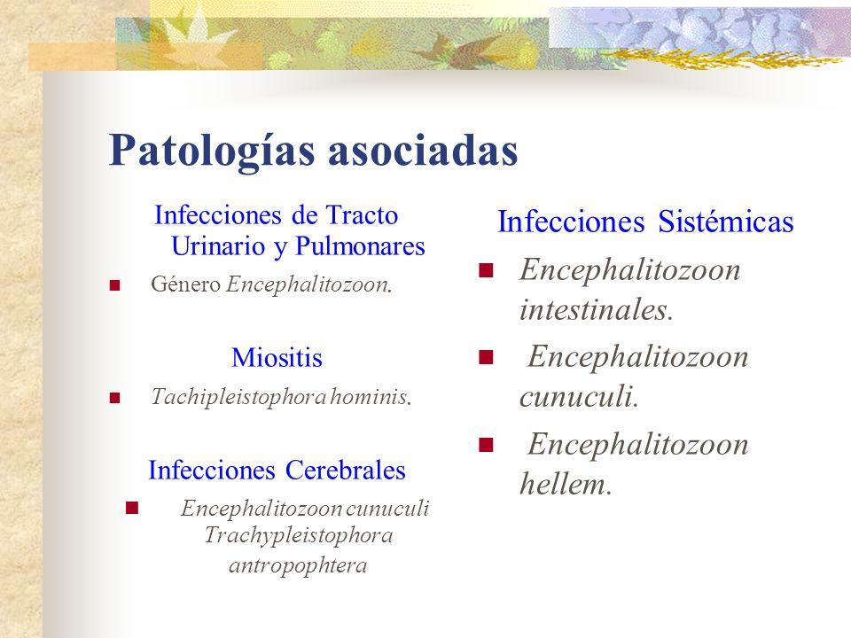 Patologías asociadas Infecciones de Tracto Urinario y Pulmonares Género Encephalitozoon. Miositis Tachipleistophora hominis. Infecciones Cerebrales En