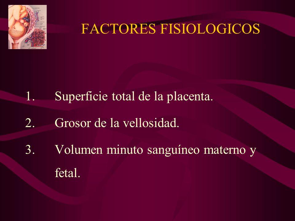 FACTORES FISIOLOGICOS 1.Superficie total de la placenta. 2.Grosor de la vellosidad. 3.Volumen minuto sanguíneo materno y fetal.