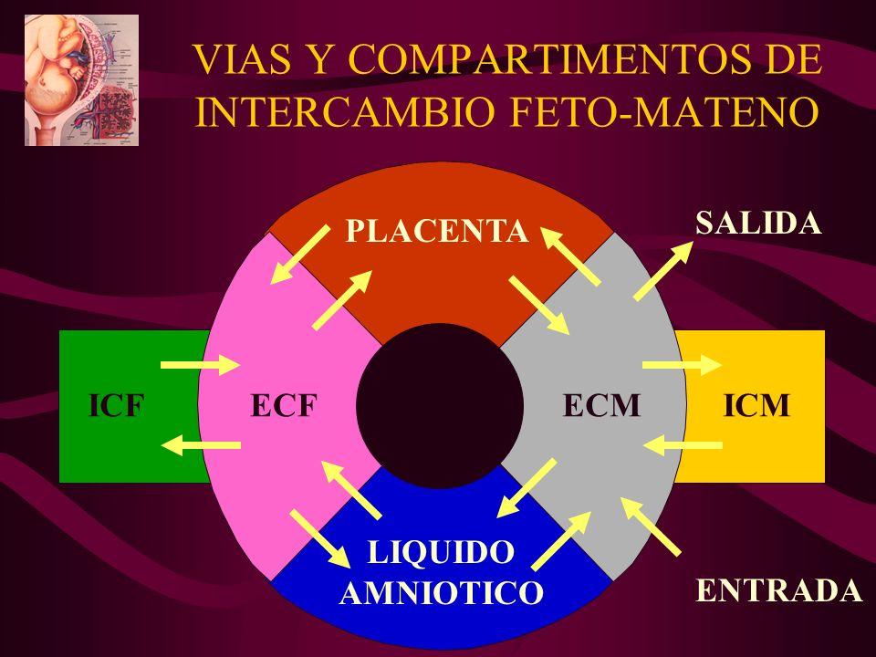 VIAS Y COMPARTIMENTOS DE INTERCAMBIO FETO-MATENO PLACENTA LIQUIDO AMNIOTICO ICFECFECMICM SALIDA ENTRADA