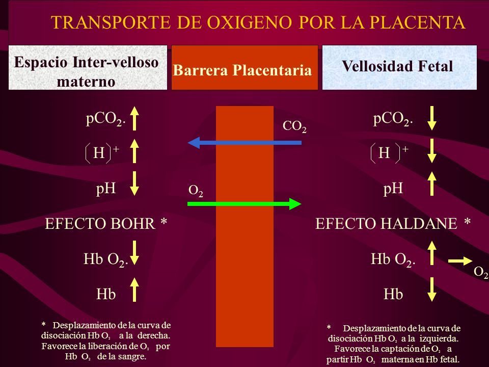 pCO 2. H + pH EFECTO BOHR * Hb O 2. Hb * Desplazamiento de la curva de disociación Hb O 2 a la derecha. Favorece la liberación de O 2 por Hb O 2 de la