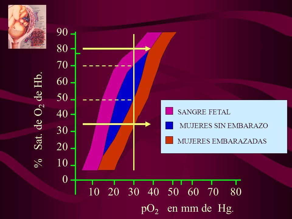 90 80 70 60 50 40 30 20 10 0 10 20 30 40 50 60 70 80 SANGRE FETAL MUJERES EMBARAZADAS MUJERES SIN EMBARAZO pO 2 en mm de Hg. % Sat. de O 2 de Hb.