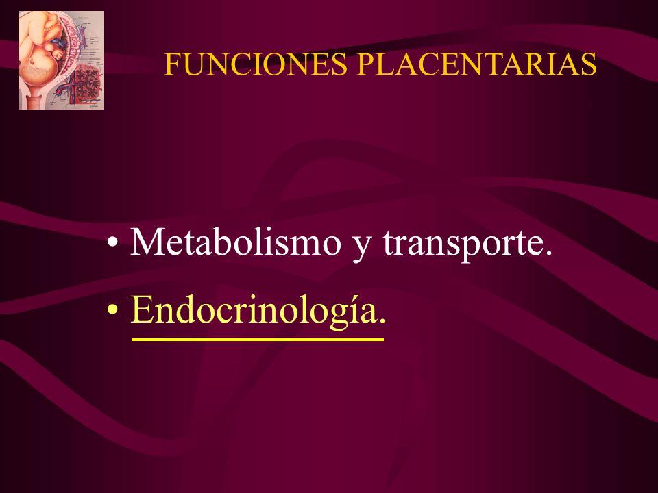 FUNCIONES PLACENTARIAS Metabolismo y transporte. Endocrinología.