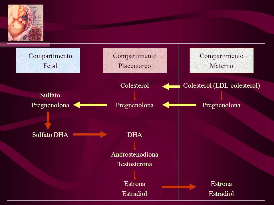 Compartimento Fetal Sulfato Pregnenolona Sulfato DHA Compartimento Placentareo Colesterol Pregnenolona DHA Androstenodiona Testosterona Estrona Estrad