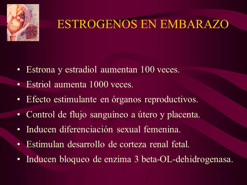 ESTROGENOS EN EMBARAZO Estrona y estradiol aumentan 100 veces. Estriol aumenta 1000 veces. Efecto estimulante en órganos reproductivos. Control de flu