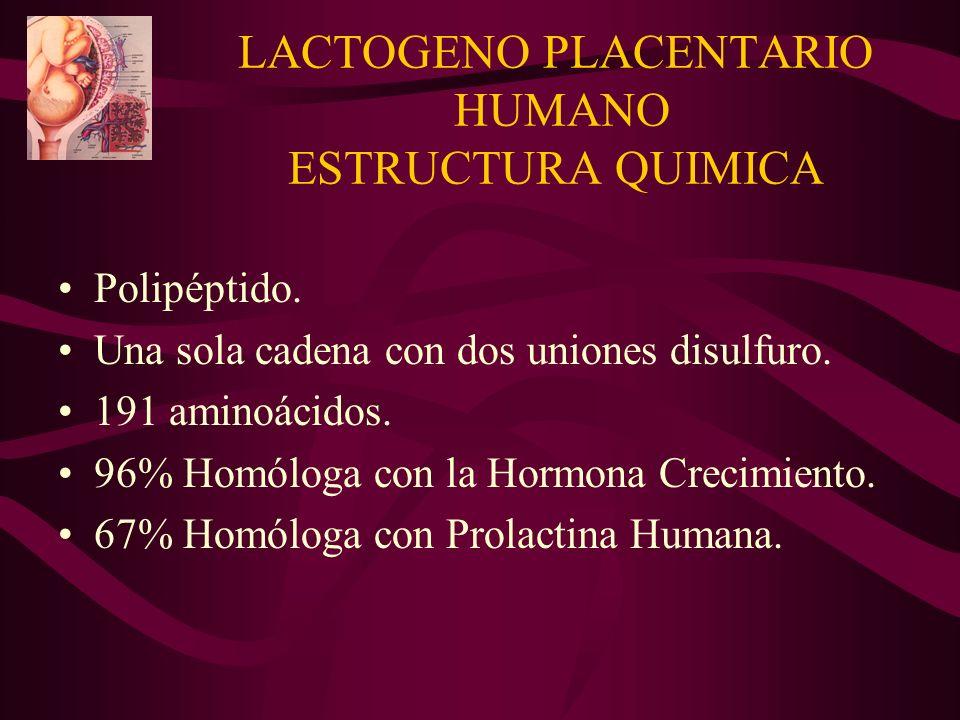 LACTOGENO PLACENTARIO HUMANO ESTRUCTURA QUIMICA Polipéptido. Una sola cadena con dos uniones disulfuro. 191 aminoácidos. 96% Homóloga con la Hormona C