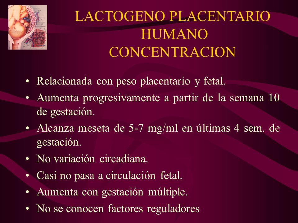 LACTOGENO PLACENTARIO HUMANO CONCENTRACION Relacionada con peso placentario y fetal. Aumenta progresivamente a partir de la semana 10 de gestación. Al