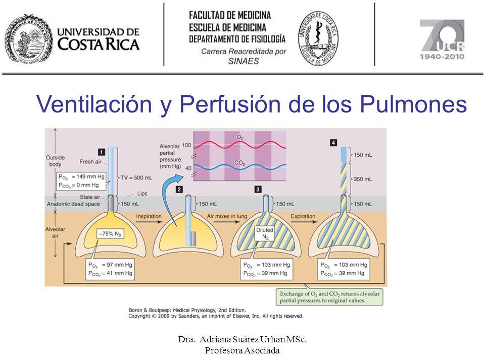 Guía de estudio Conocer las características particulares de la ventilación pulmonar y alveolar, de la perfusión pulmonar, los factores fisiológicos que las determinan, su distribución en los pulmones y los efectos fisiológicos de esto.