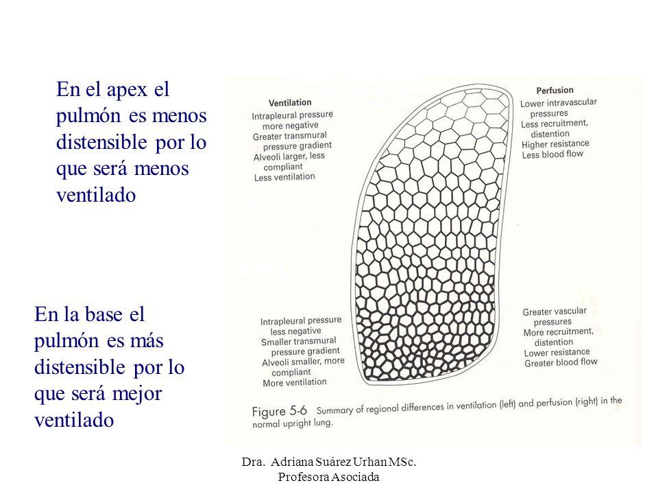En la base el pulmón es más distensible por lo que será mejor ventilado En el apex el pulmón es menos distensible por lo que será menos ventilado Dra.