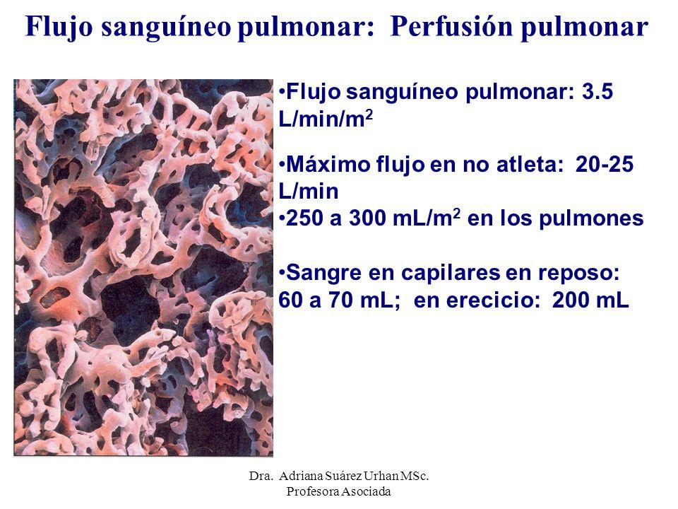 Flujo sanguíneo pulmonar: Perfusión pulmonar Flujo sanguíneo pulmonar: 3.5 L/min/m 2 Máximo flujo en no atleta: 20-25 L/min 250 a 300 mL/m 2 en los pu