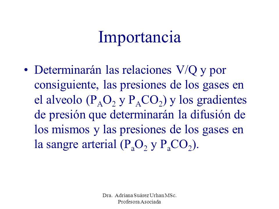 Importancia Determinarán las relaciones V/Q y por consiguiente, las presiones de los gases en el alveolo (P A O 2 y P A CO 2 ) y los gradientes de pre