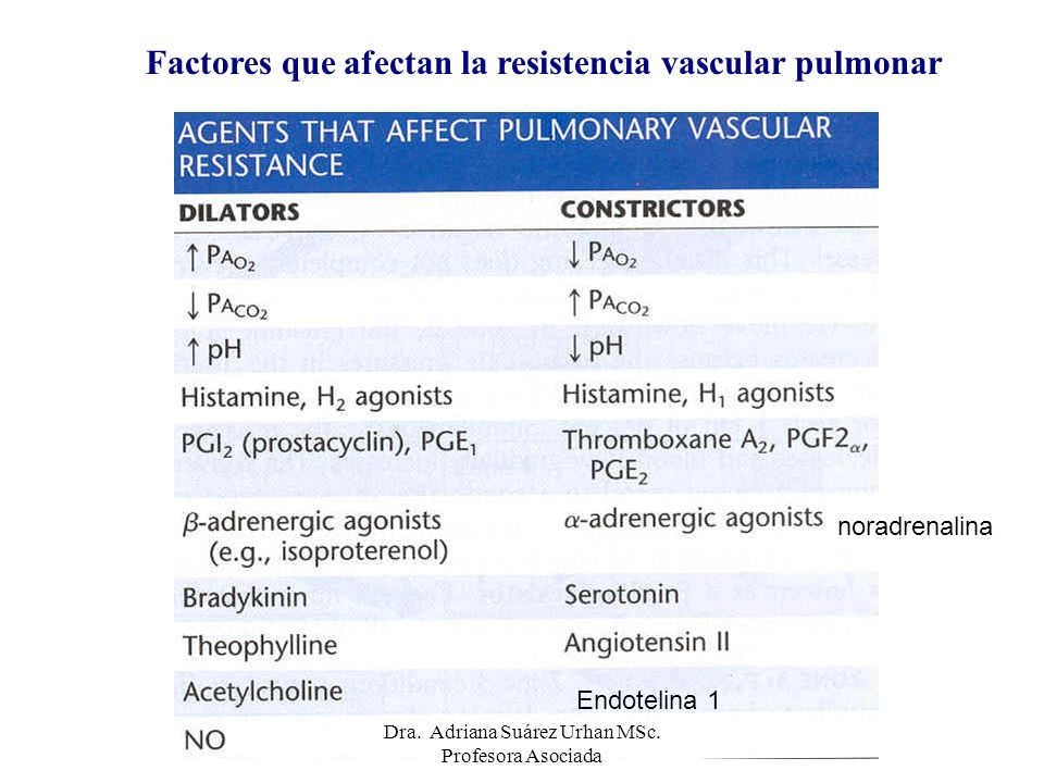 Factores que afectan la resistencia vascular pulmonar Endotelina 1 noradrenalina Dra. Adriana Suárez Urhan MSc. Profesora Asociada
