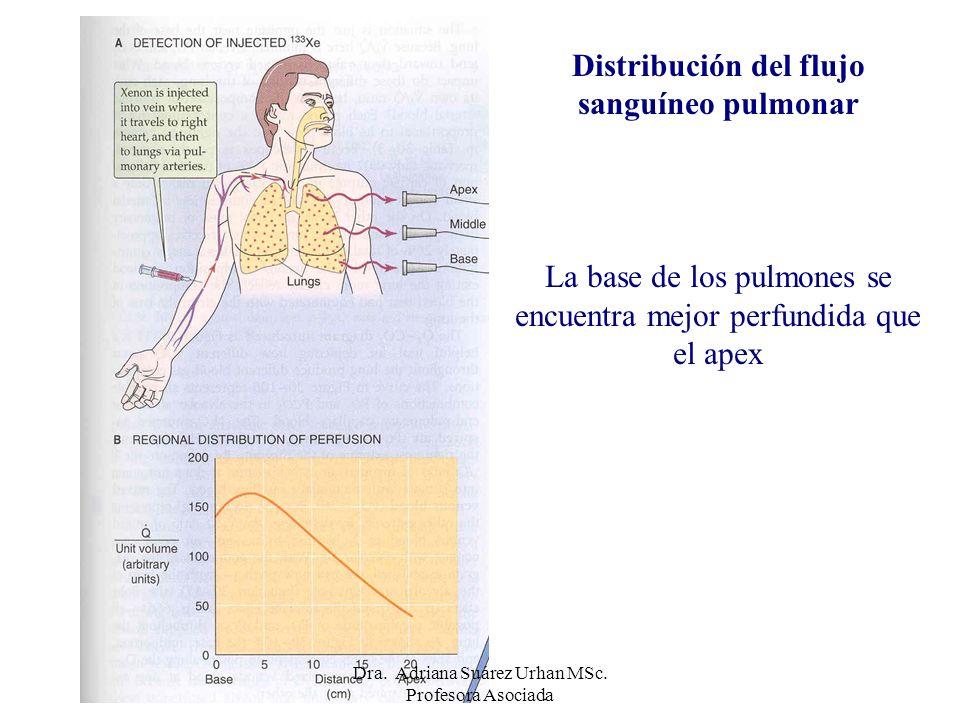 Distribución del flujo sanguíneo pulmonar La base de los pulmones se encuentra mejor perfundida que el apex Dra. Adriana Suárez Urhan MSc. Profesora A