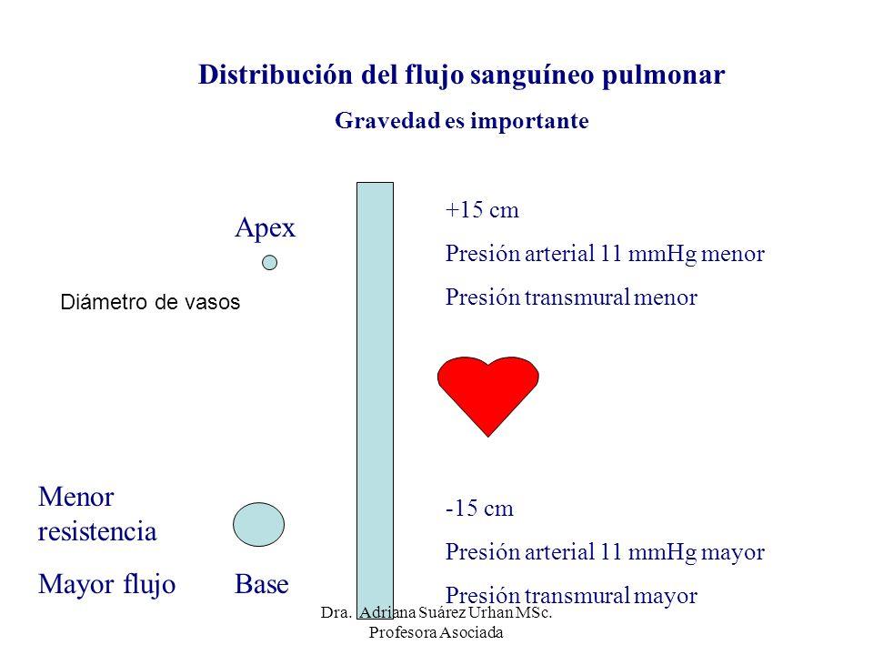 Distribución del flujo sanguíneo pulmonar Gravedad es importante Apex Base +15 cm Presión arterial 11 mmHg menor Presión transmural menor -15 cm Presi