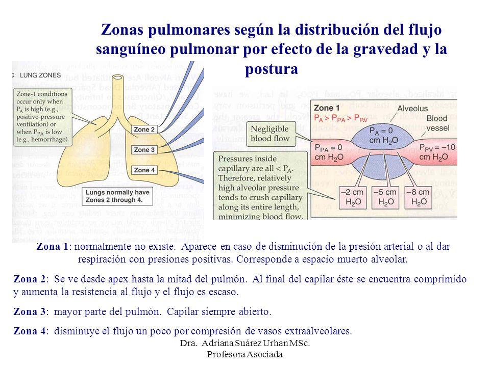 Zona 1: normalmente no existe. Aparece en caso de disminución de la presión arterial o al dar respiración con presiones positivas. Corresponde a espac