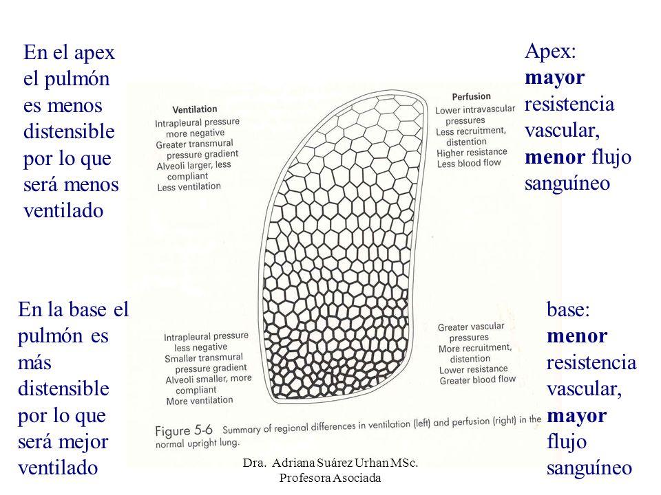 Apex: mayor resistencia vascular, menor flujo sanguíneo base: menor resistencia vascular, mayor flujo sanguíneo En el apex el pulmón es menos distensi