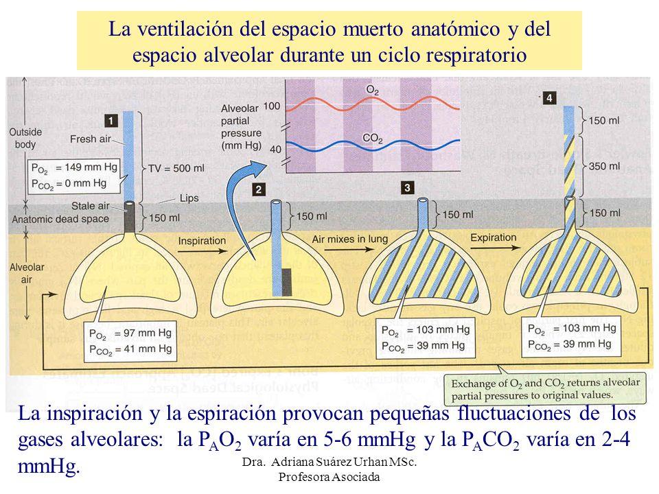 La ventilación del espacio muerto anatómico y del espacio alveolar durante un ciclo respiratorio La inspiración y la espiración provocan pequeñas fluc