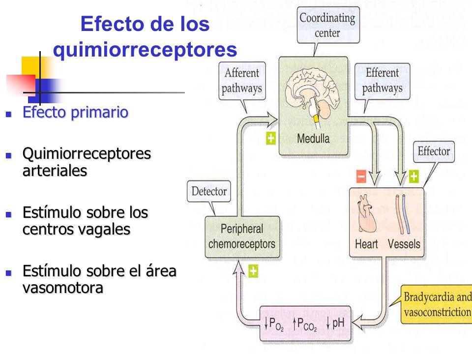 Efecto de los quimiorreceptores Efecto primario Efecto primario Quimiorreceptores arteriales Quimiorreceptores arteriales Estímulo sobre los centros v