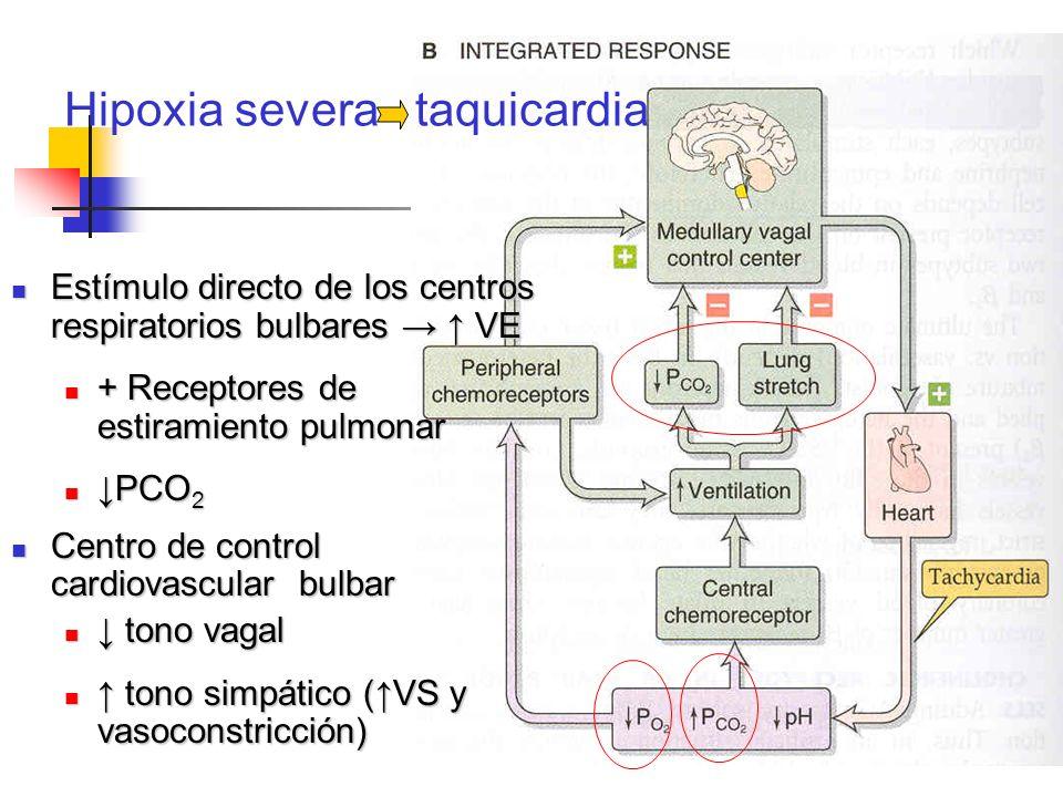 Hipoxia severa taquicardia Estímulo directo de los centros respiratorios bulbares VE Estímulo directo de los centros respiratorios bulbares VE + Recep