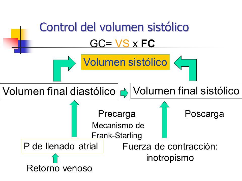 P de llenado atrial Fuerza de contracción: inotropismo Volumen final diastólico Volumen sistólico Volumen final sistólico GC= VS x FC Control del volu