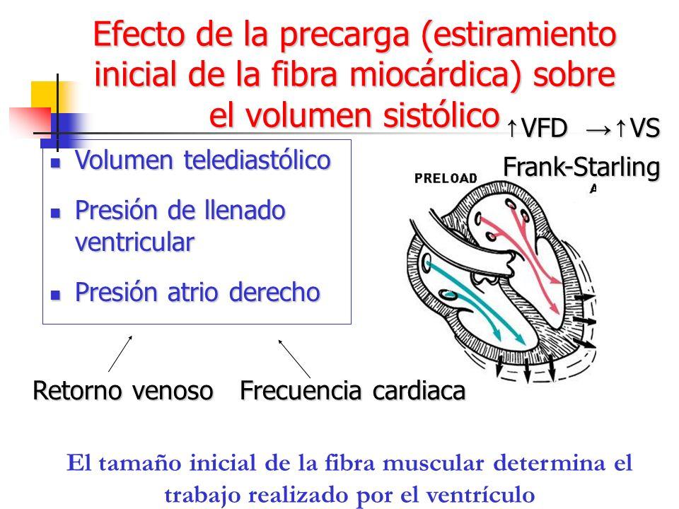 El tamaño inicial de la fibra muscular determina el trabajo realizado por el ventrículo Volumen telediastólico Volumen telediastólico Presión de llena
