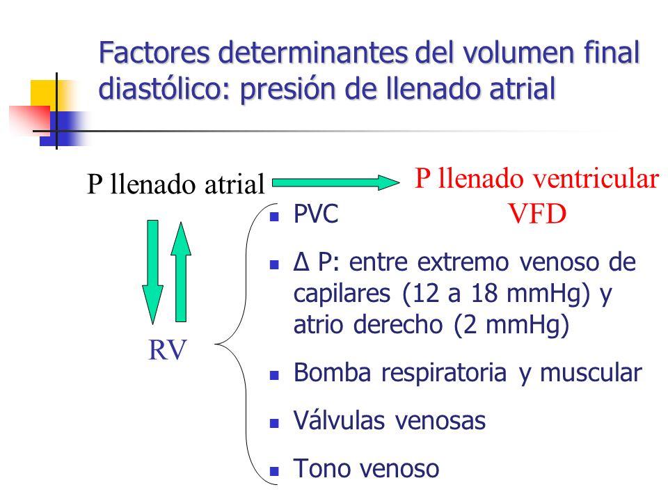 Factores determinantes del volumen final diastólico: presión de llenado atrial PVC Δ P: entre extremo venoso de capilares (12 a 18 mmHg) y atrio derec