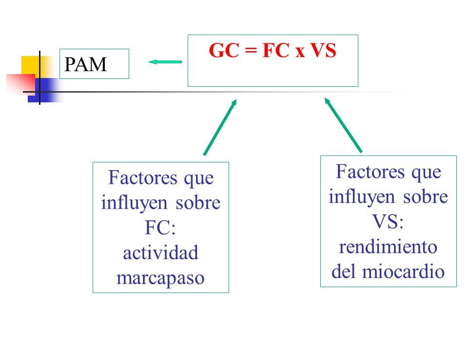 GC = FC x VS Factores que influyen sobre FC: actividad marcapaso Factores que influyen sobre VS: rendimiento del miocardio PAM