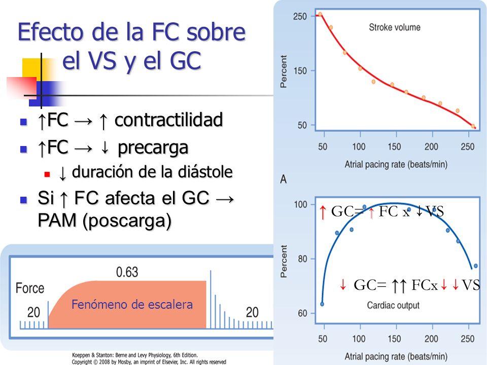 Efecto de la FC sobre el VS y el GC Fenómeno de escalera GC= FC x VS FC contractilidad FC contractilidad FC precarga FC precarga duración de la diásto