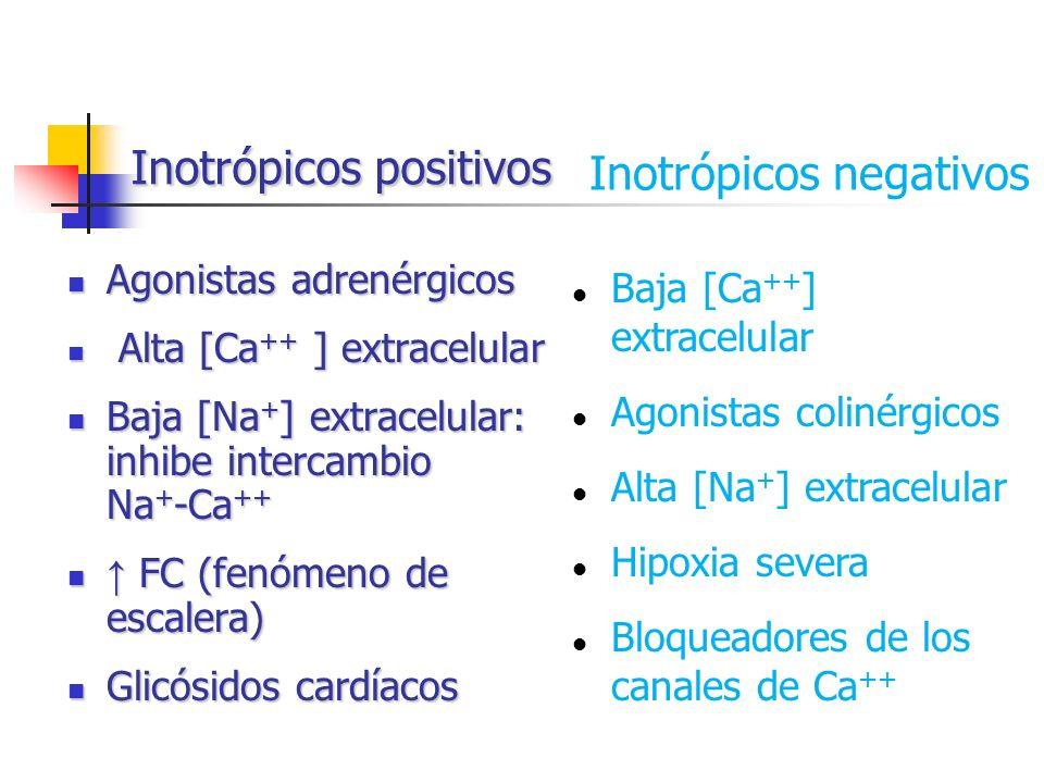 Inotrópicos positivos Agonistas adrenérgicos Agonistas adrenérgicos Alta [Ca ++ ] extracelular Alta [Ca ++ ] extracelular Baja [Na + ] extracelular: i