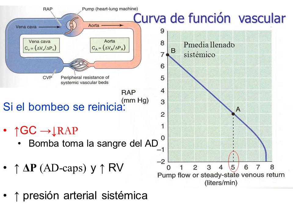 Pmedia llenado sistémico Si el bombeo se reinicia: RAPGC RAP Bomba toma la sangre del AD ΔP (AD-caps) y RV presión arterial sistémica Curva de función