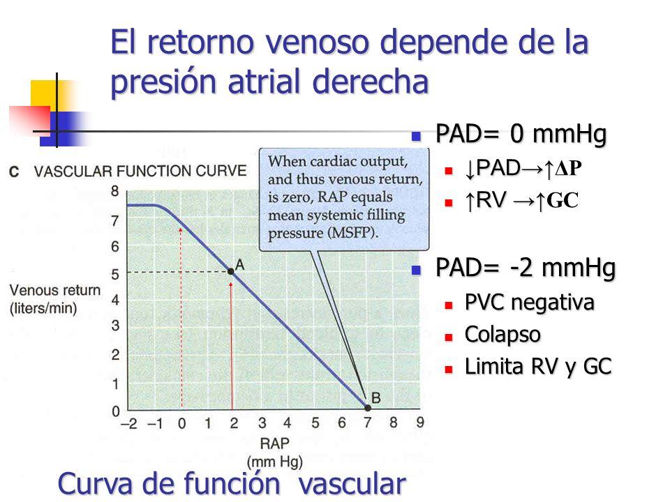 El retorno venoso depende de la presión atrial derecha PAD= 0 mmHg PAD= 0 mmHg PAD PAD ΔP RV RV GC PAD= -2 mmHg PAD= -2 mmHg PVC negativa PVC negativa