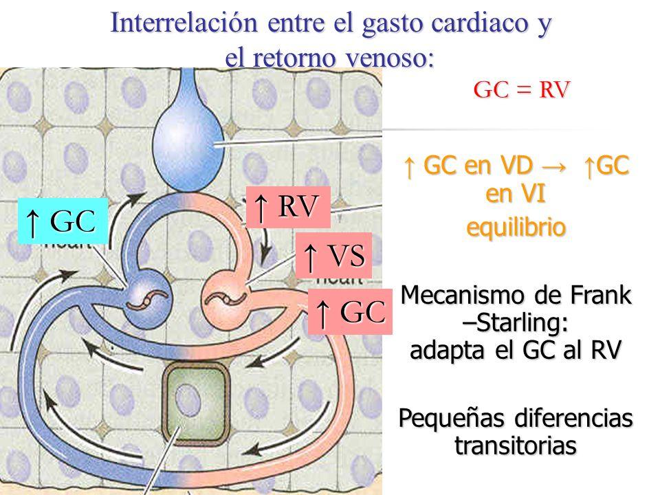 Interrelación entre el gasto cardiaco y el retorno venoso: GC en VD GC en VI GC en VD GC en VIequilibrio Mecanismo de Frank –Starling: adapta el GC al
