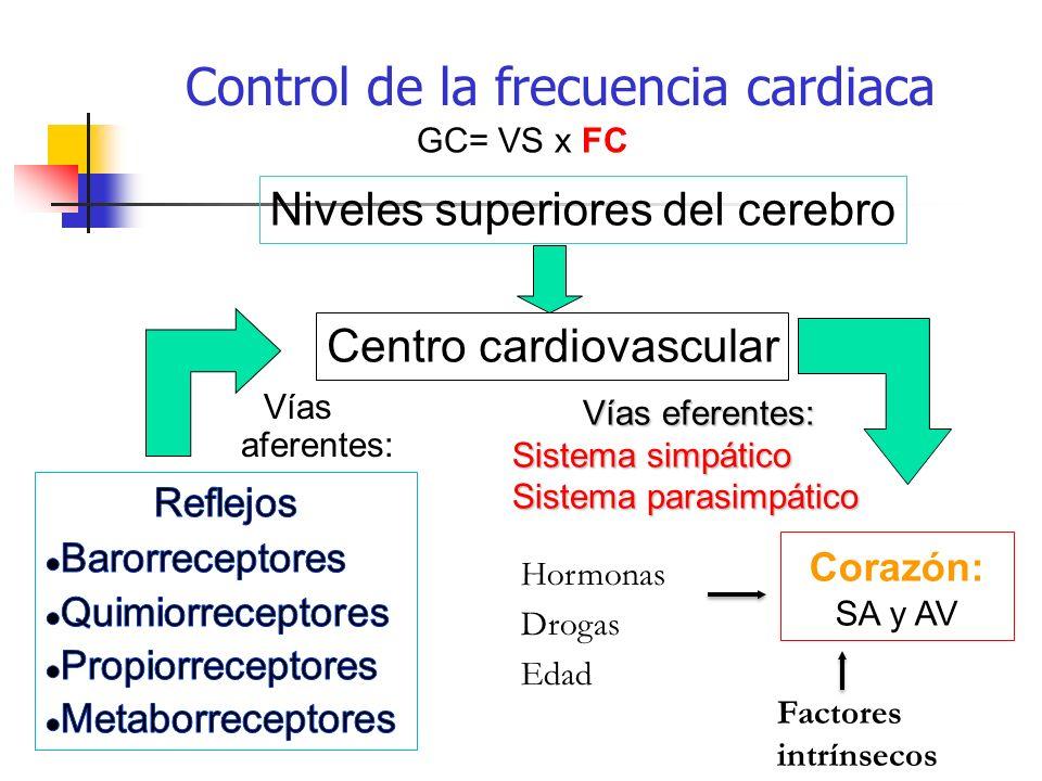 Control de la frecuencia cardiaca Vías eferentes: Sistema simpático Sistema parasimpático Centro cardiovascular Niveles superiores del cerebro Corazón
