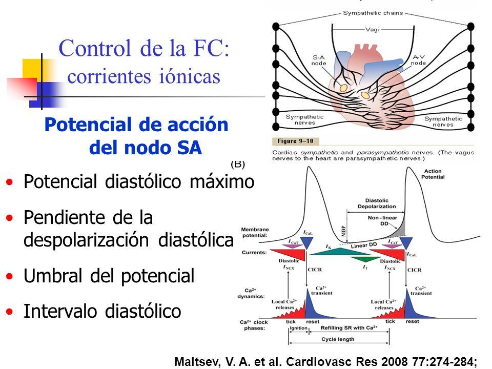 Maltsev, V. A. et al. Cardiovasc Res 2008 77:274-284; Control de la FC: corrientes iónicas Potencial de acción del nodo SA Potencial diastólico máximo