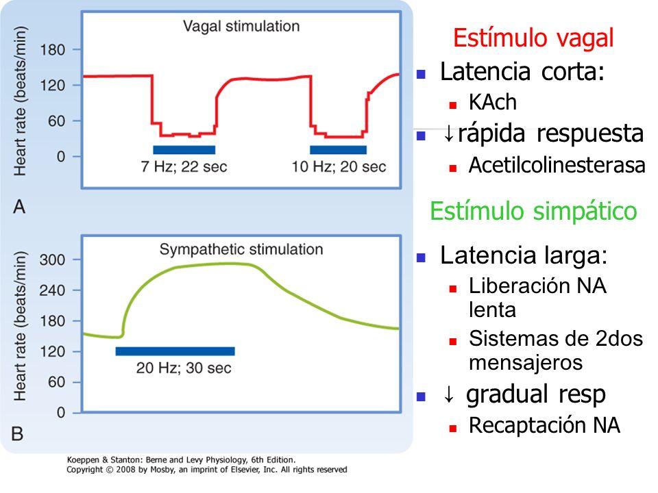 Estímulo vagal Latencia corta: KAch rápida respuesta Acetilcolinesterasa Estímulo simpático Latencia larga: Liberación NA lenta Sistemas de 2dos mensa